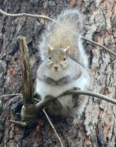 Shocked face squirrel