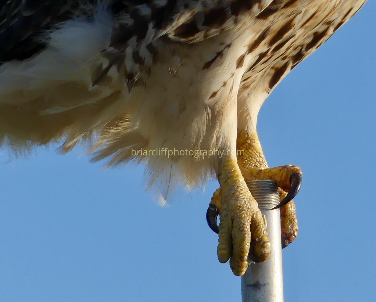 Talon close-up