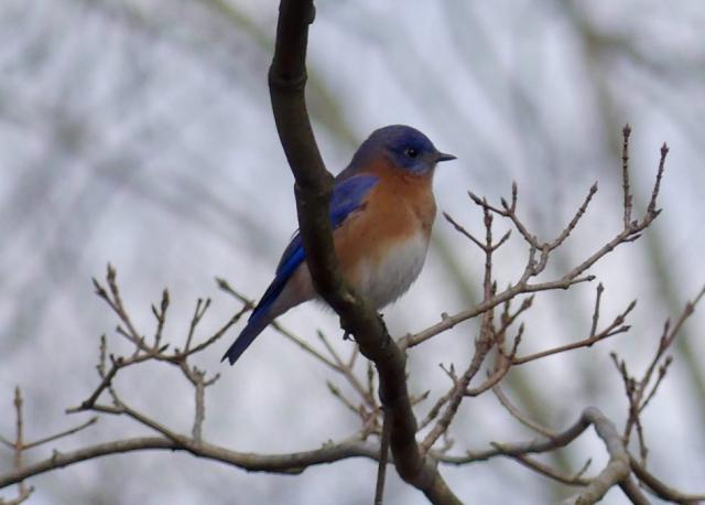 Bluebird of friendliness