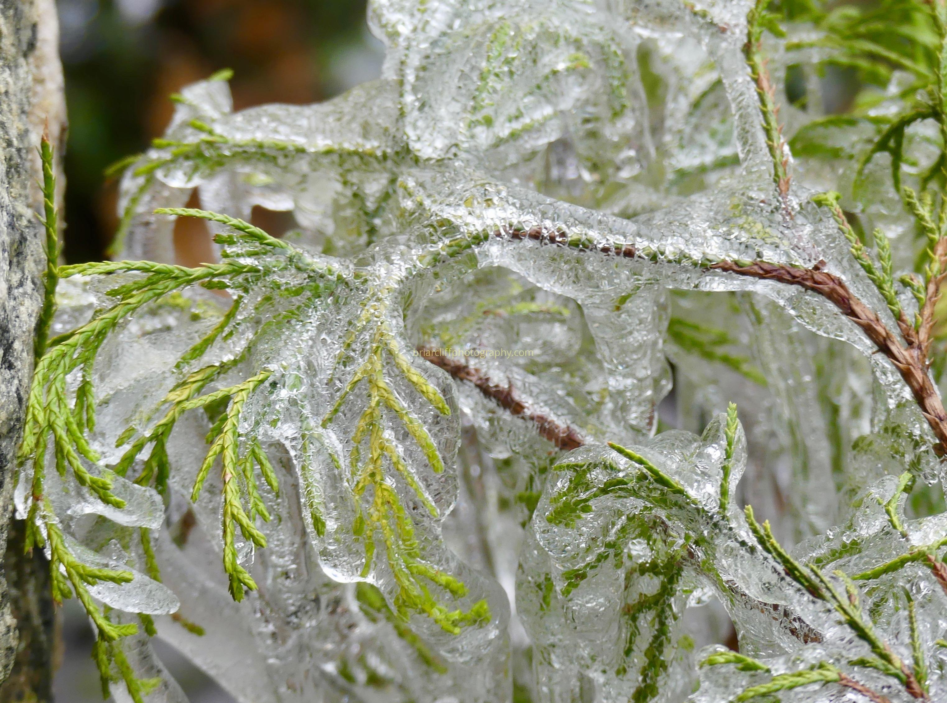 ice, plant