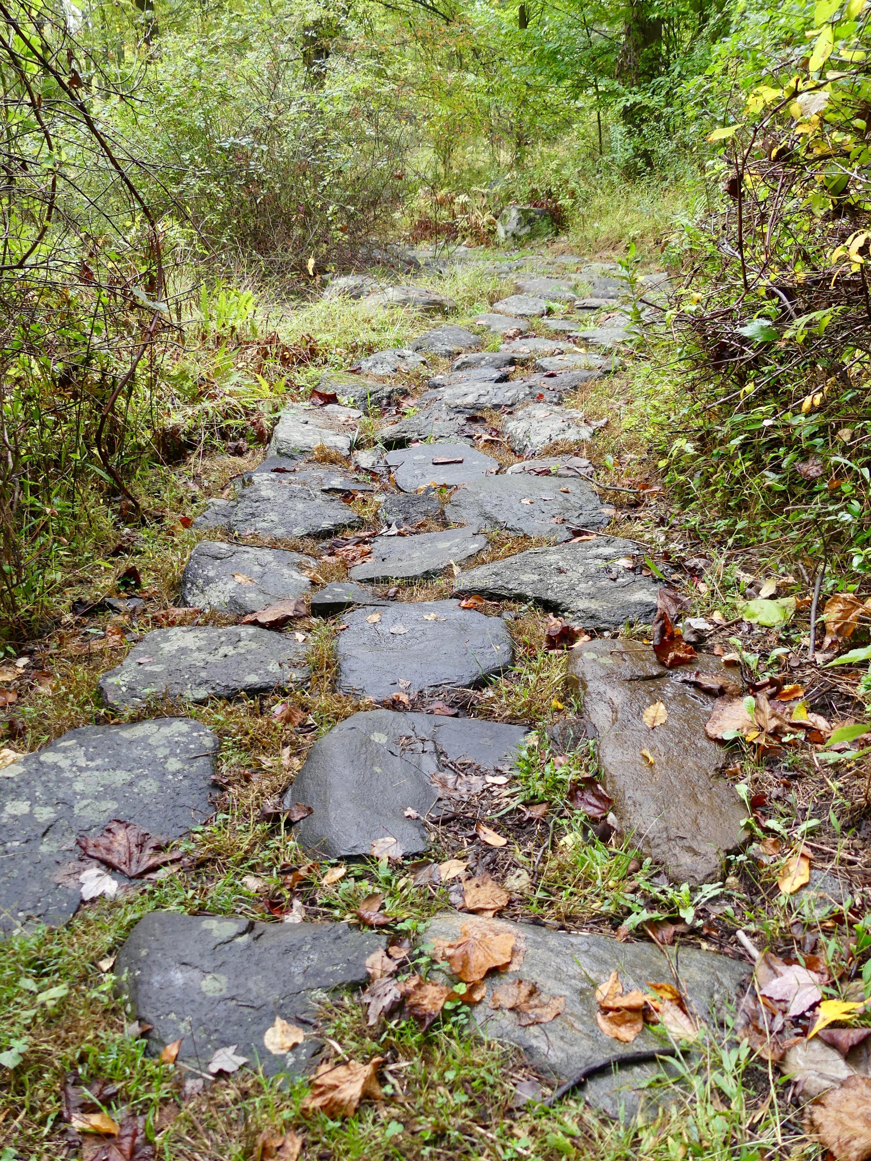path, woods