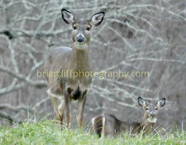 If deer had album covers....