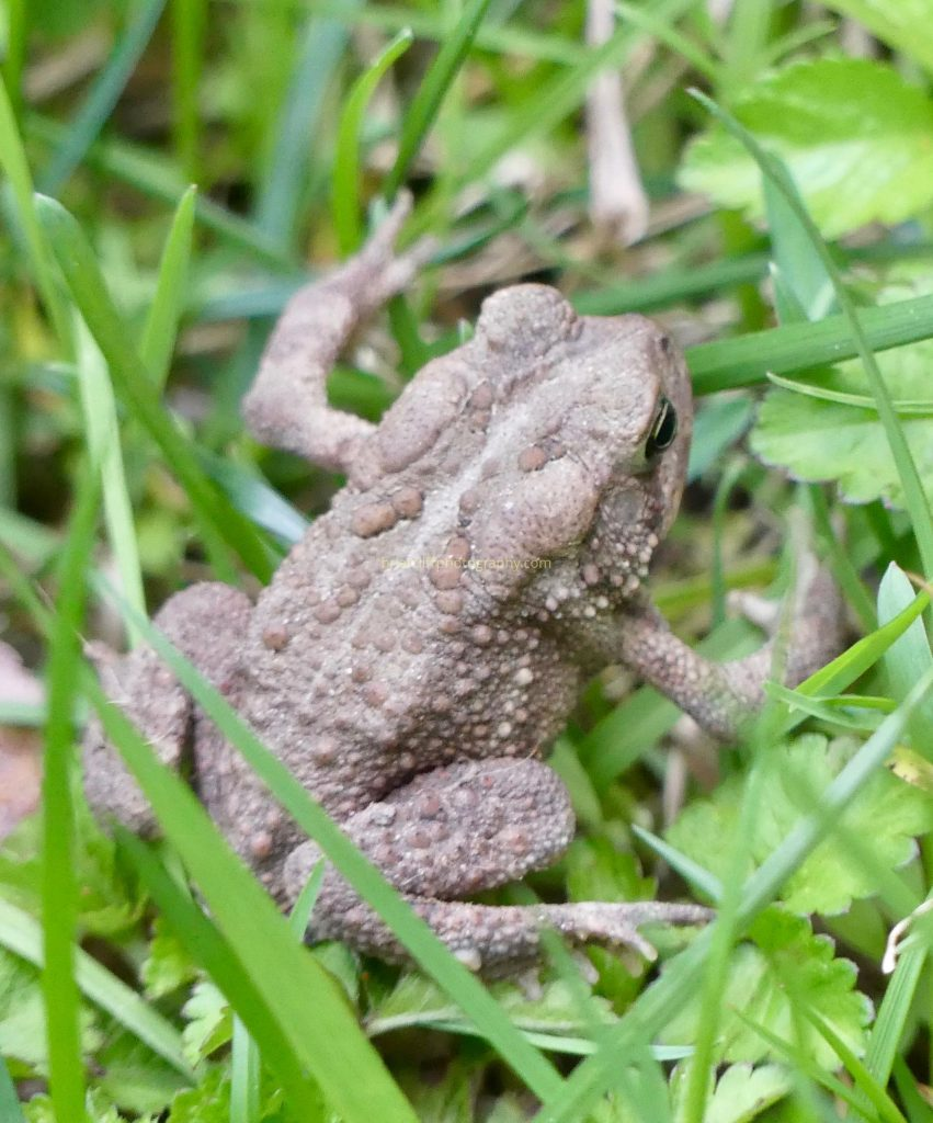 flowers toad