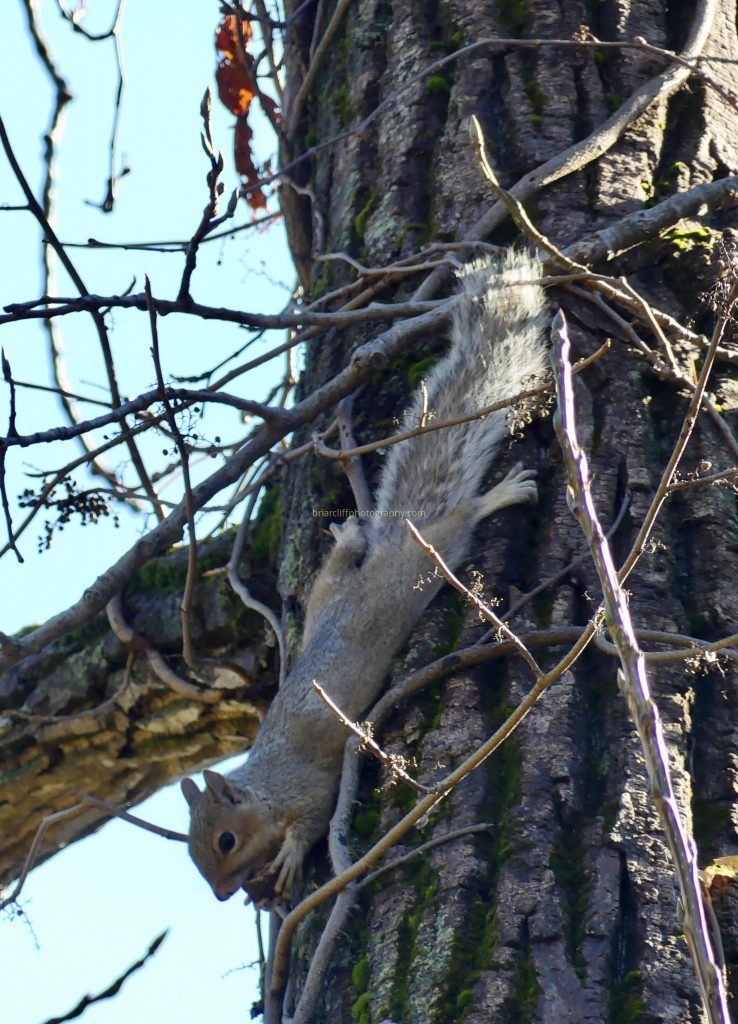 Talented squirrel