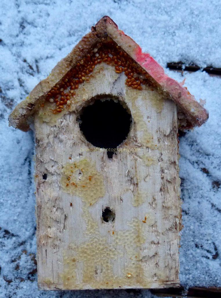 raccoon, birdhouse